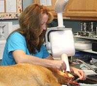 Medical Services for Pets
