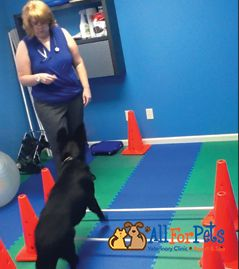 Pet Physical Therapy Rehab