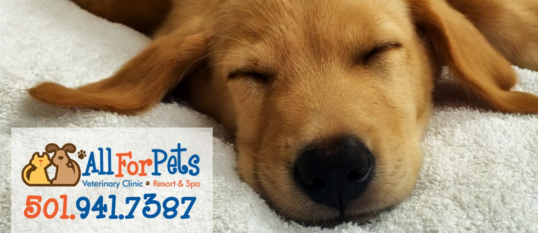 All For Pets Veterinary Clinic | Cabot Vet | Exams & Boarding