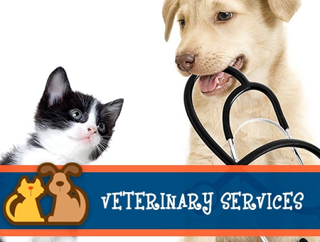 VET SERVICES IN CABOT